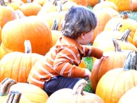 Pumpkin_patch3